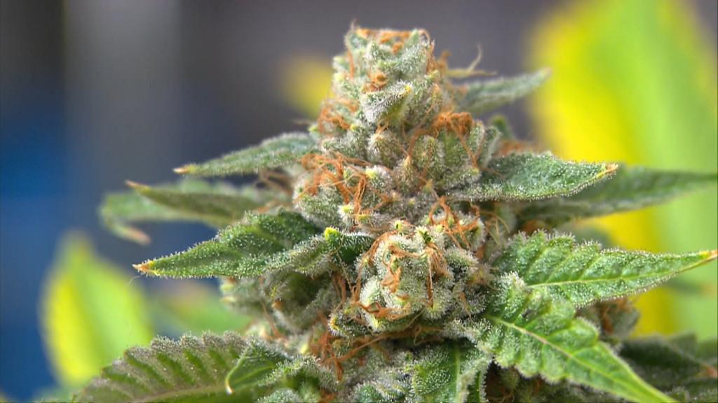 marijuana_140111