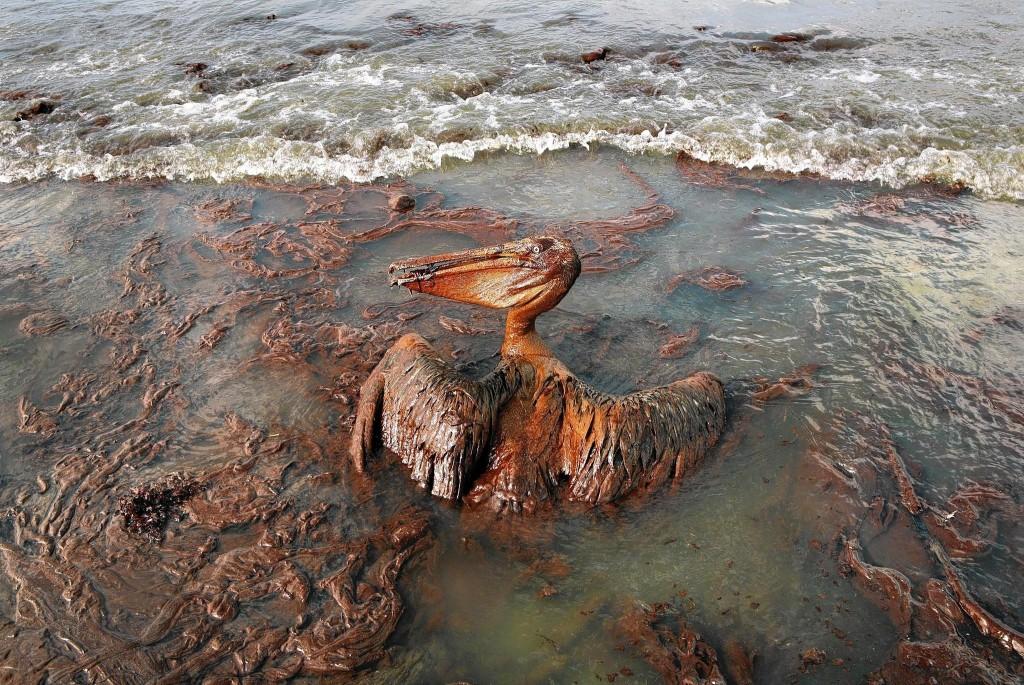 BP OIL -cmc-jpg-20140221
