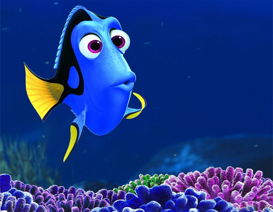 Dory-feature-image